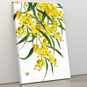 Australian Golden Wattle – Our Exclusive Design