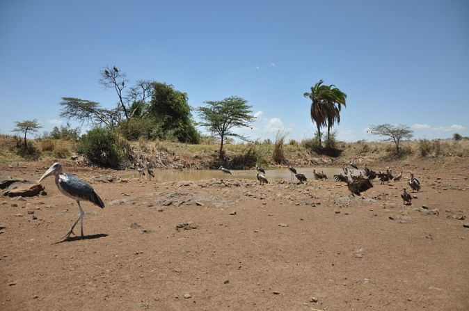 lascar_vultures_and_other_birds_around_an_oasis_-_nairobi_national_park_4540815038_jorge-lascar-from-australia_commons-w