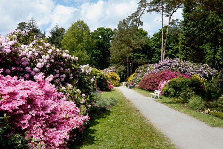 Graal-Müritz_Rhododendronpark08