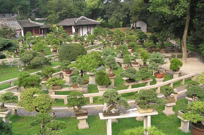 800px-Bonsai_forest_at_the_gardens_of_pagoda_Yunyan_Ta
