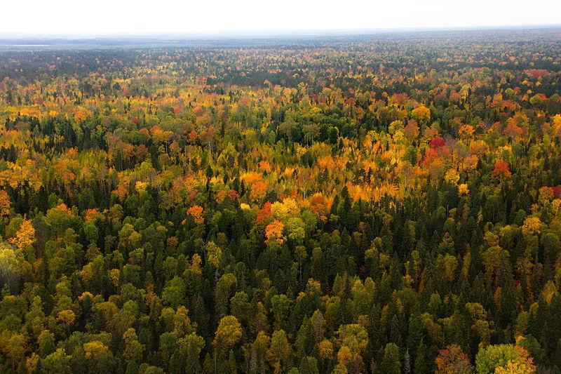 800px-Yuganskiy_nature_reserve_aerial_view