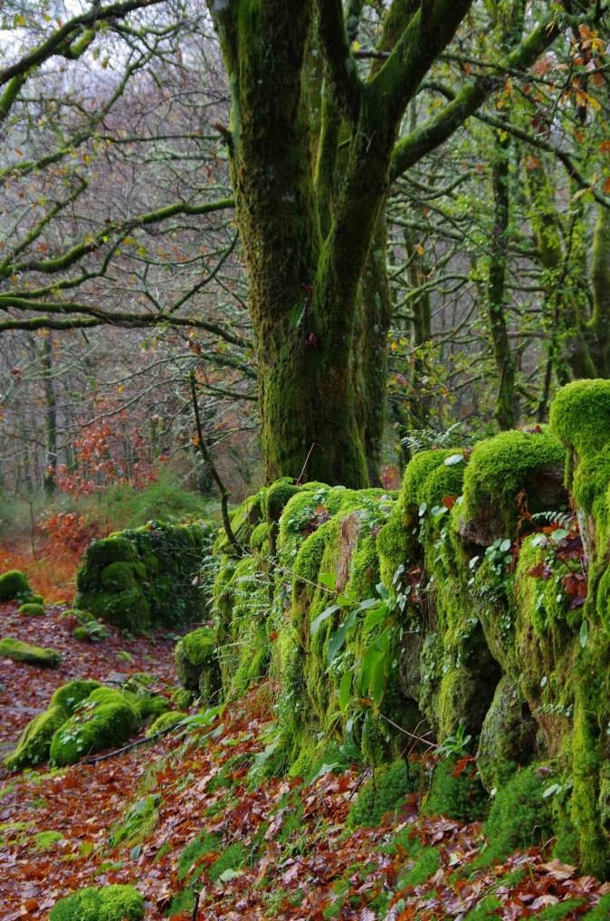 espa_a_paisajes_landscape_spain_galicia_pontevedra_gaby1_ggl1-406431.jpg!d