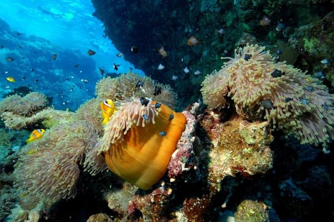 diver-2360422_960_720