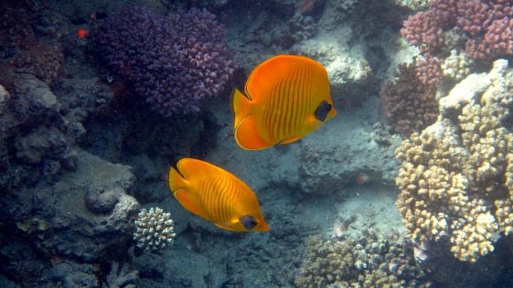 fish-1539142_960_720