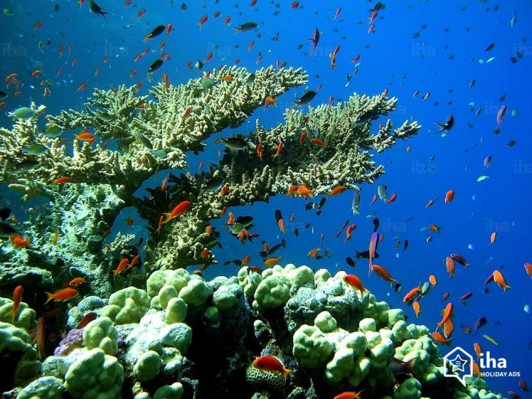 La-desirade-Recifs-coralliens-de-cayes