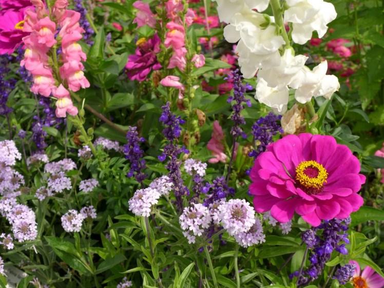 zinnia_loewenmaeulchen_verbenie_summer_flowers_plant_nature_flower_bed_flowers-1089305.jpg!d