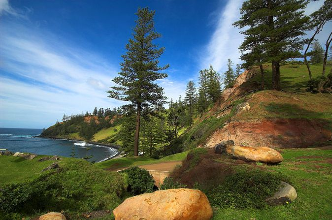800px-Norfolk-Island-Pines