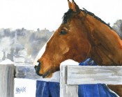 bay horse winter 032411
