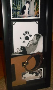 pooch shadow box