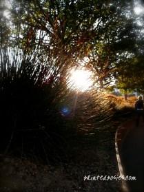 The Getty Garden