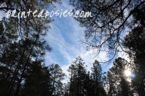 Blue Skies in the Forest