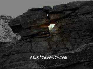 Sahuaro Through The Rocks