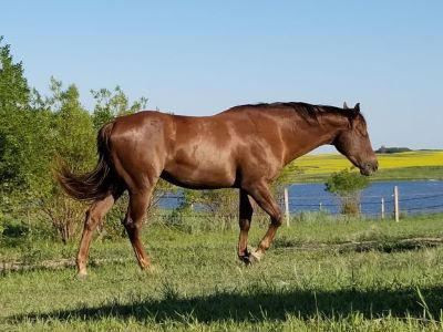 A Good Machine mare in Pasture condition