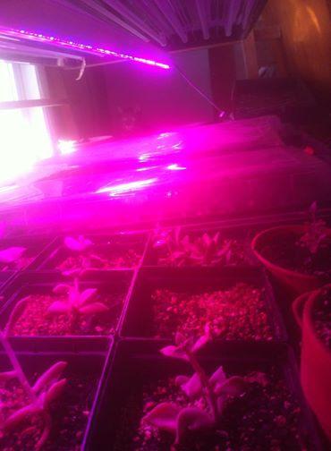 LED germ table