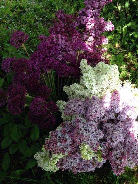 lilac and allium 14