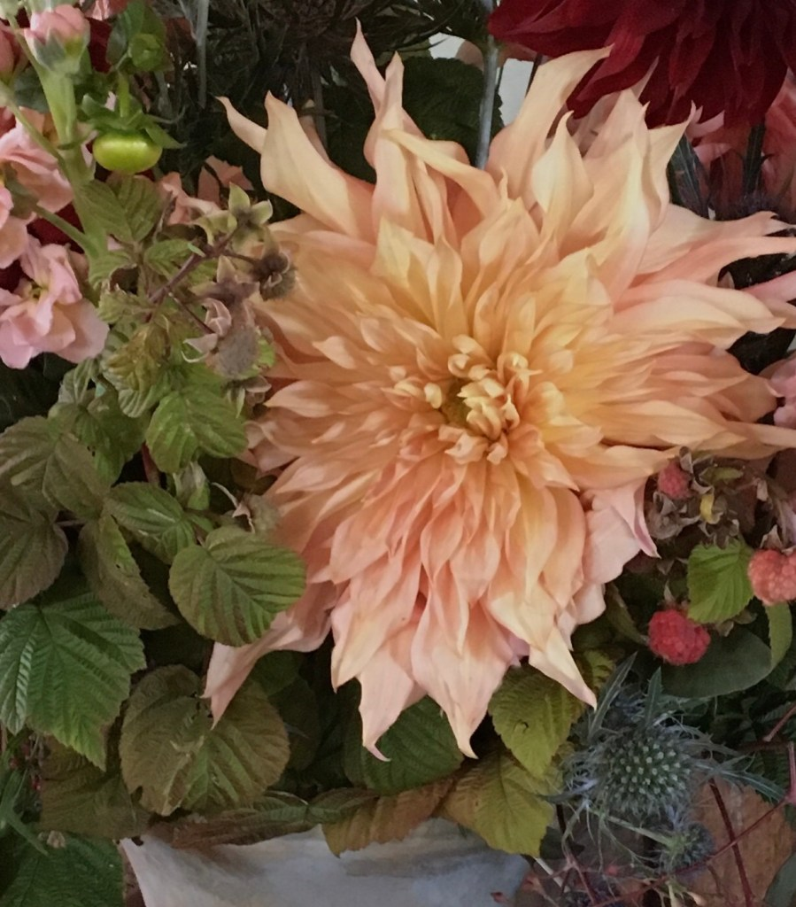 Dahlia Tuber Online Store Is Open For 2020