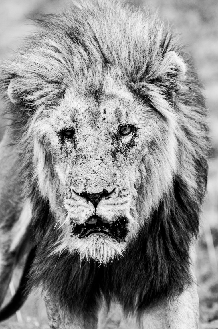 Long Live The King_11