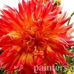 Купить картину-Цветы14