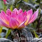 Купить картину-Цветы19