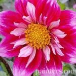 Купить картину-Цветы20