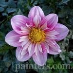 Фото-Георгины,Цветы,заказать картину,цветочный пейзаж,натюрморт,живопись маслом.Ботанический сад