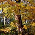 Фото-Осенние пейзажи Олега М. Караваева,фотоальбом.