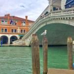 Картина маслом - Венецианская чайка