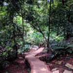Тропа в джунгли