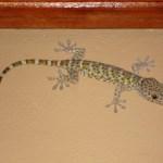 Фауна Индонезийских островов,ящерицы