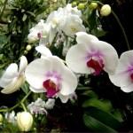 Флора Индонезии,заказать картину