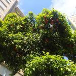 Апельсиновые деревья Барселоны