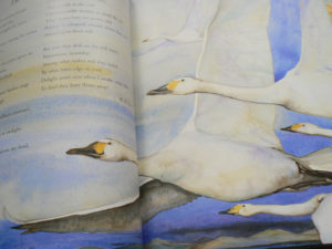 Jackie-Morris_illustration_The-Wild-Swans-at-Coole