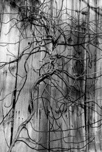 033007-bruce-dean-artwork