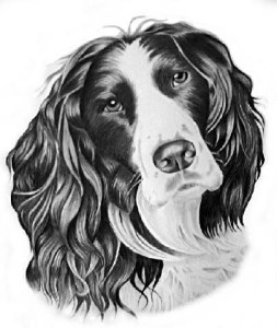 george-dog-portrait_big