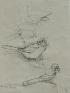Brown Towee graphite sketch 9.5 x 7 inches by J. Fenwick Lansdowne