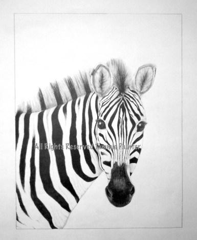 """Zebra"" 12x18"" Graphite on Drawing Paper"