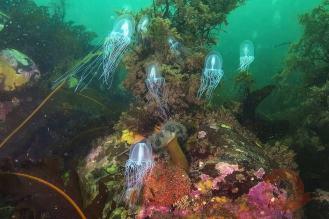Фотограф Андрей Нарчук, медузы
