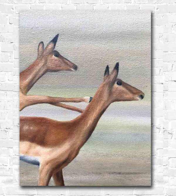 Gazelles Heads