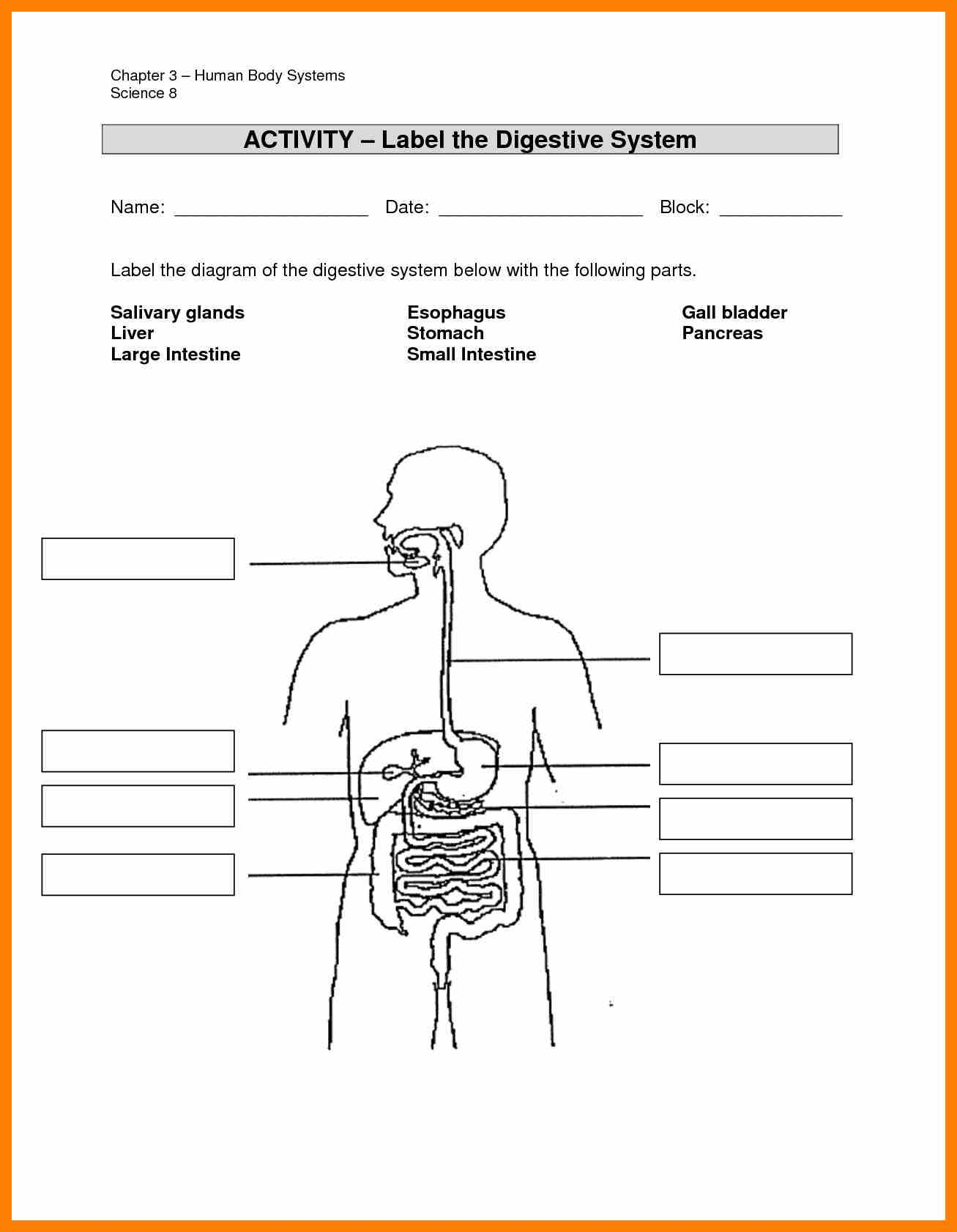 31 Label Body Systems