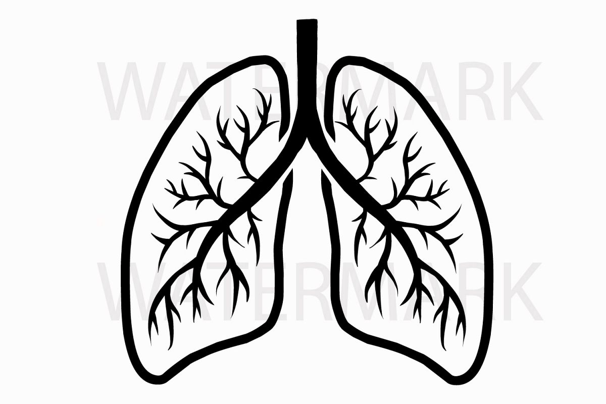 Lungs Paintings Search Result At Paintingvalley