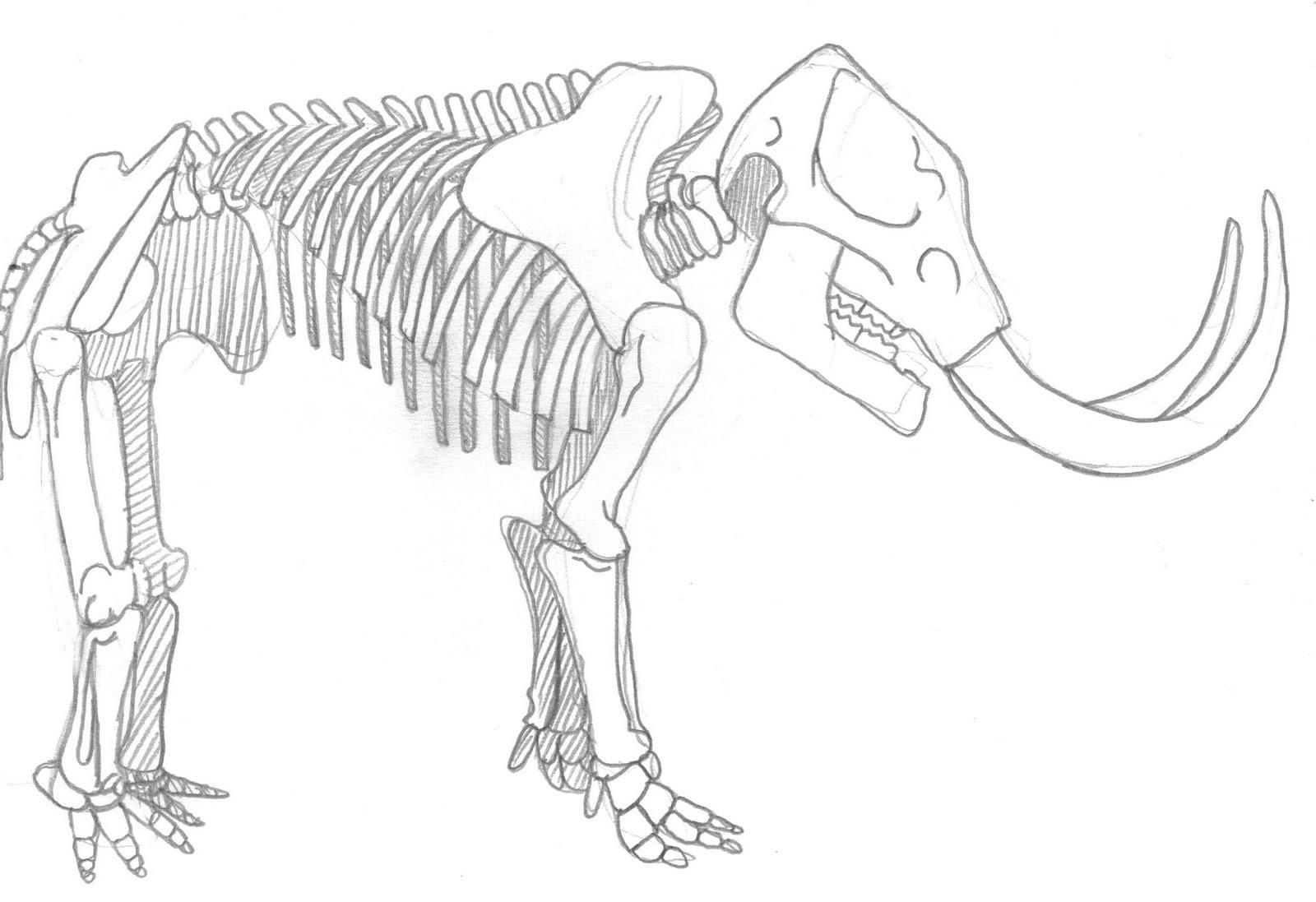 Mammals Drawing At Paintingvalley