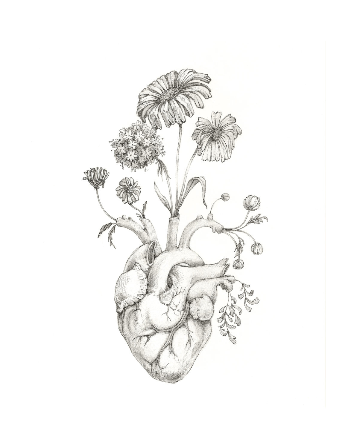Anatomical Heart Sketch At Paintingvalley