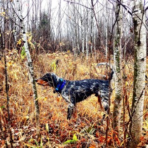 duncan pointing grouse3