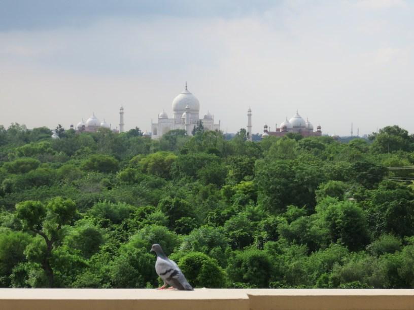 Oberoi Agra view
