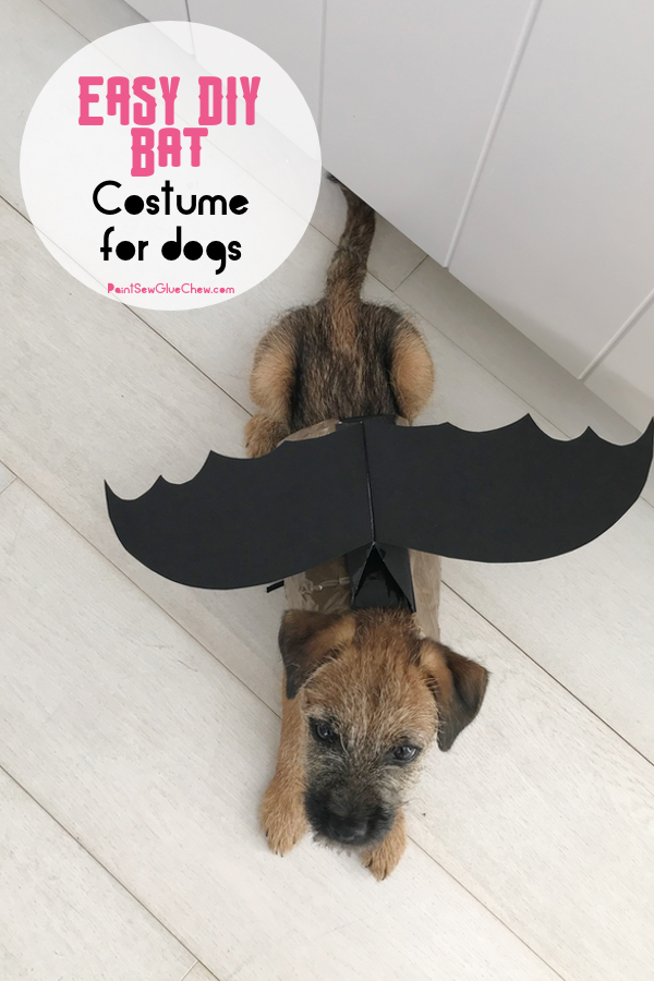 Dog in a bat halloween costume for dogs