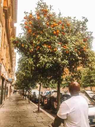 A man walking the streets in Rome looking at a fruit tree.
