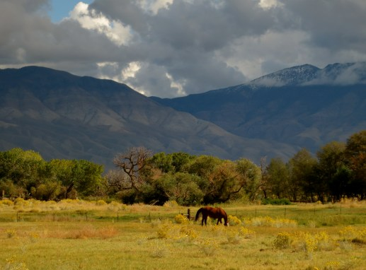 pastoral setting