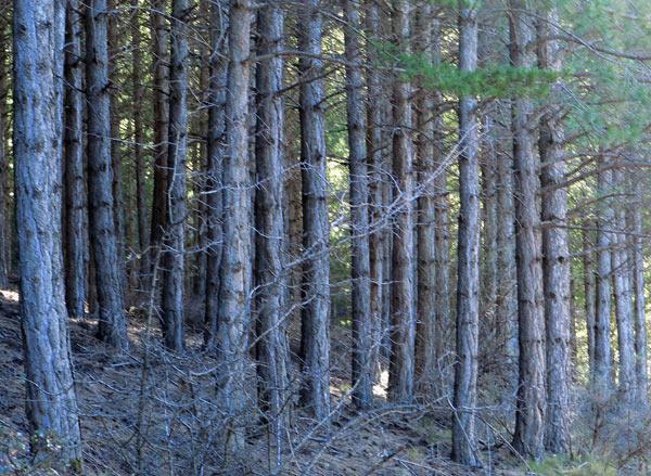 Paisajes del Agua: El 'Bosque Protector' del Marquesado del Zenete y el agua (5/6)