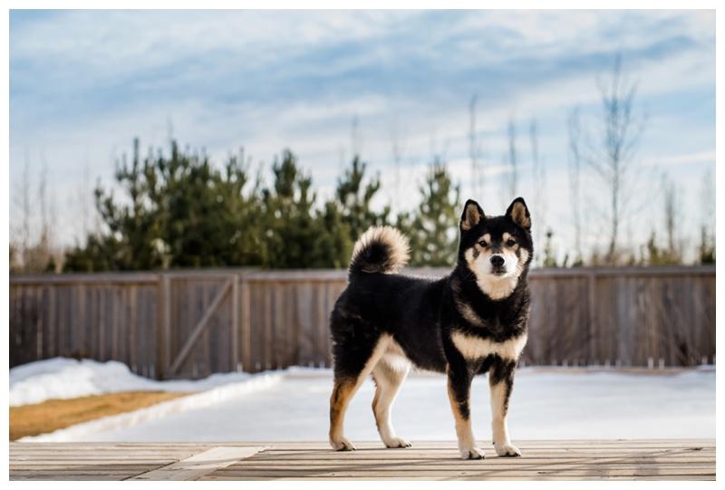 Calgary Pet Photography