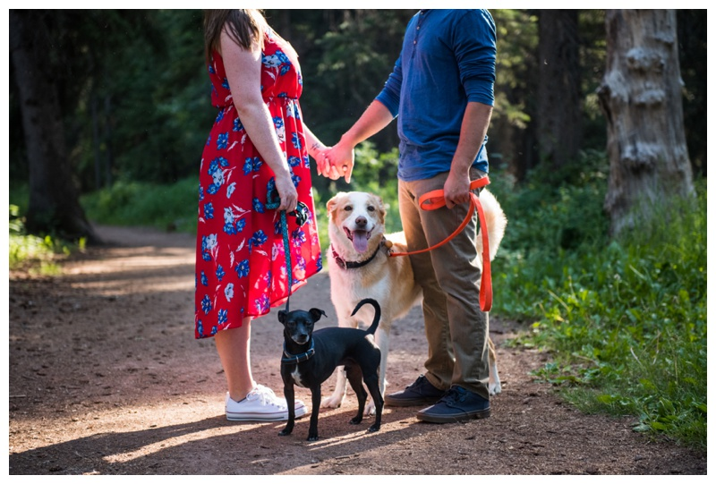 Dogs In Engagement Photo Session Calgary